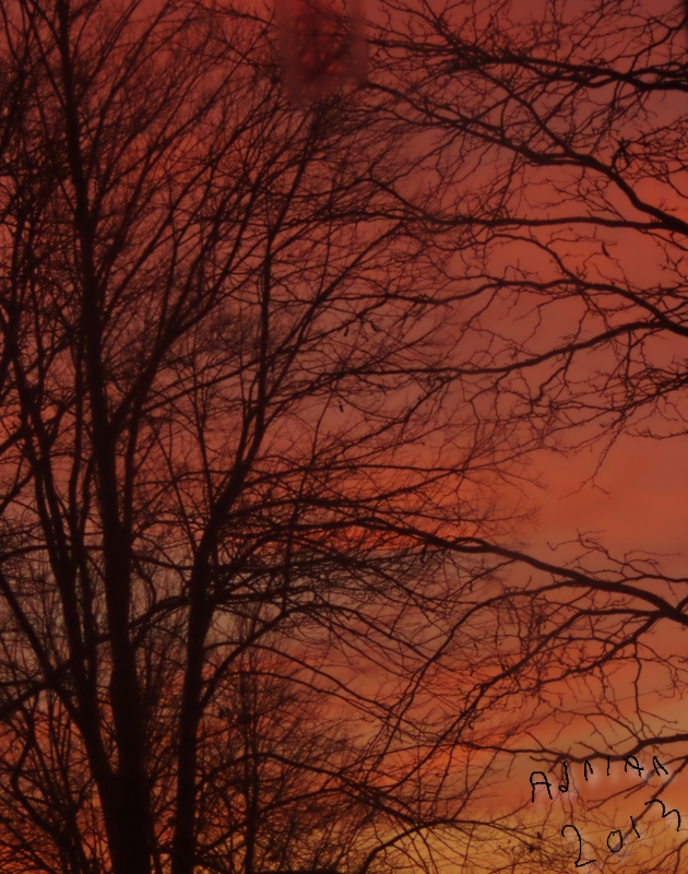 Tigger Sunrise