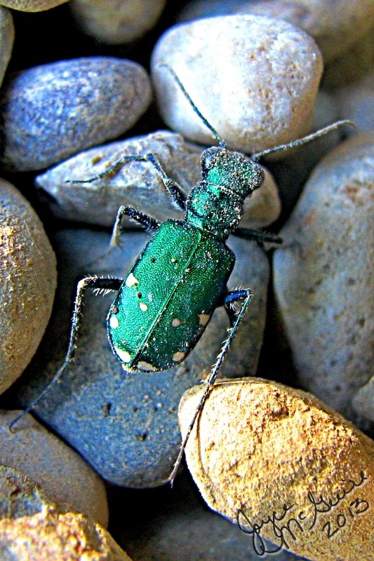 Pickle bug