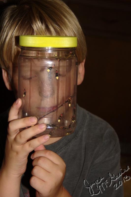 Caught Fireflies