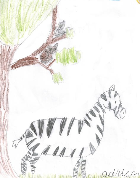 Zebra By Adrian Colored Pencils 9 October 2015